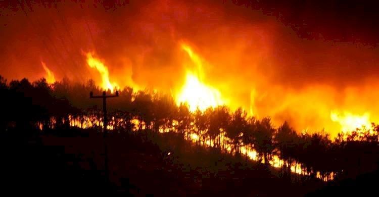 Antalyanın Manavgat İlçesinde Orman Yangını